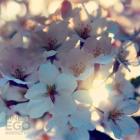 CD Cover - KIYOKO - The Beginning (Mix)